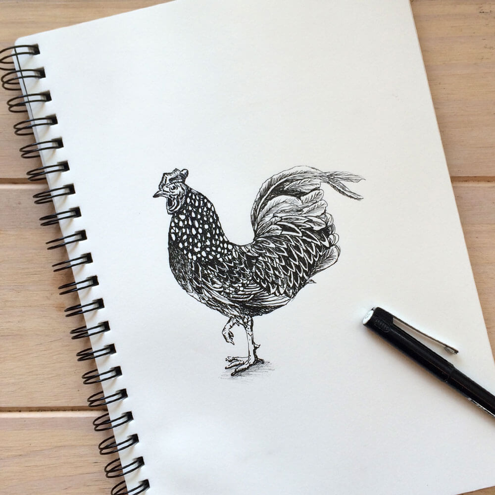 Sketch_rooster2